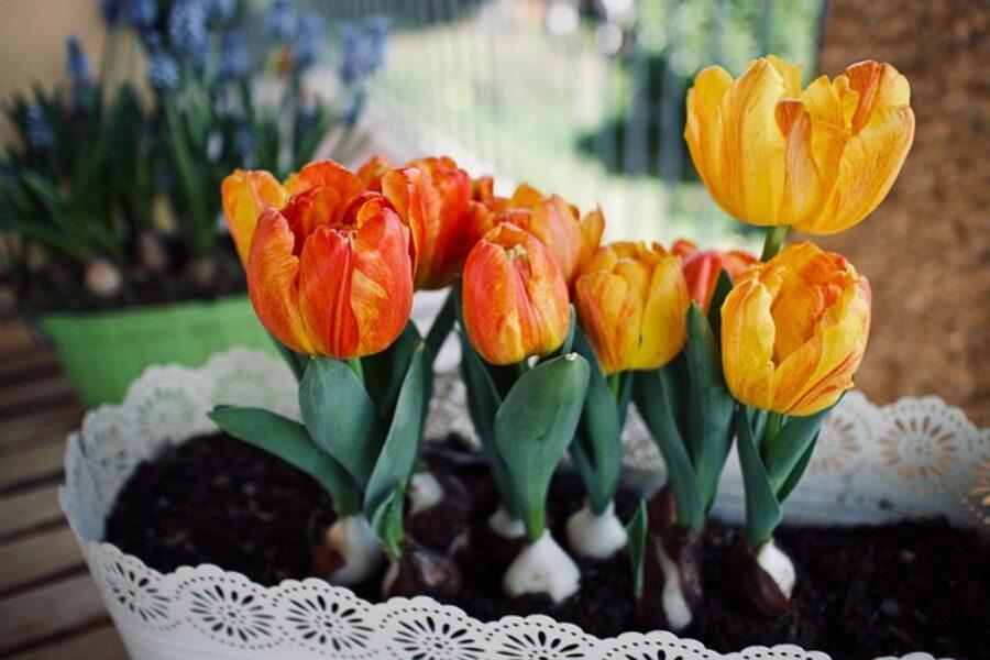 Vincerà la Primavera, Vincerà la Bellezza!